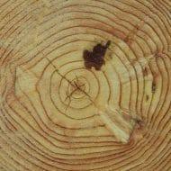 Holzaufbau1