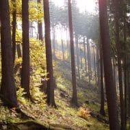 Waldstimmung1