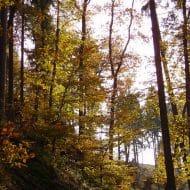 Waldstimmung3